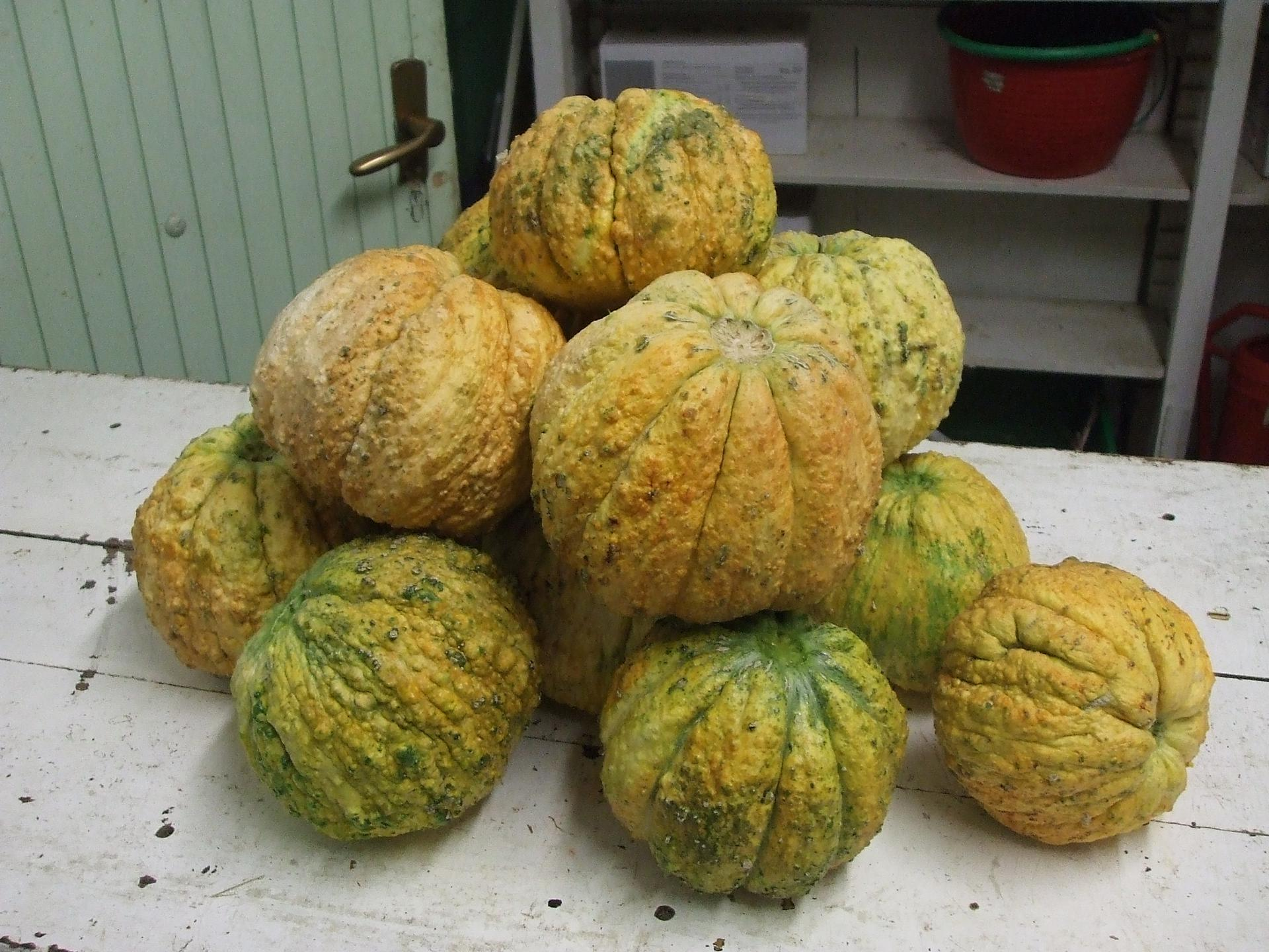 melone rospa